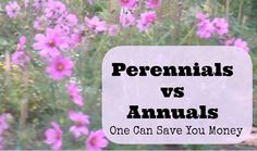 07 - Couponing for Freebies - Choosing Between Perennials and Annuals