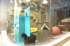 Hôtels de luxe et Resorts: Leading Hotels of the World Hotel Gato, Cat Hotel, Jackson Galaxy, Dog Crate Furniture, Diy Dog Crate, Animal Gato, Diy Cat Toys, Most Luxurious Hotels, Luxury Hotels