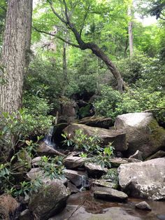 Ramsey Cascades trail, Great Smokey Mountains National Park, Tennessee Camping In Tennessee, East Tennessee, Ramsey Cascades, Smoky Mtns, Cades Cove, Camping Activities, Great Smoky Mountains, Weekend Trips, Mississippi