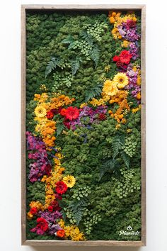 Ecology & Sustainability: Our Moss Wall Responsibility — Planted Design Our Etsy pieces undergo these steps and are safe for a home or office. Moss Wall Art, Moss Art, Vertical Garden Design, Vertical Gardens, Vertical Plant Wall, Moss Garden, Cacti Garden, Herbs Garden, Fruit Garden