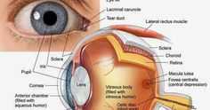 Eye Structure, Structure And Function, Parts Of An Eye, Eye Function, Optic Nerve, The Retina, Human Eye, Science