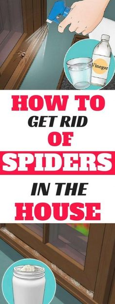 If You Do These Things, You'll Never See Another Spider in Your Kitchen, Bathroom or Bedroom Again Excellent Short informative article