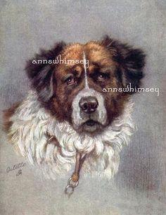 Saint Bernard Dog Art Print, Beautiful, Smart, and Gentle Huge Dog, RESTORED ART, Gift for the Dog Lover, Affordable Wall Art #72