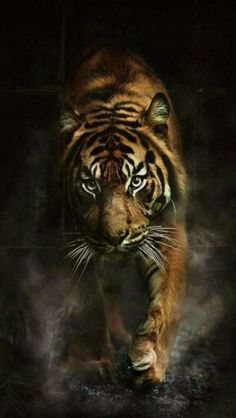 I love tigers! This one I thought was really cool, a tiger walking through smoke. Great for phone wallpapers!