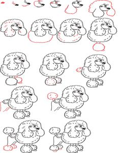 poodle drawing step by step