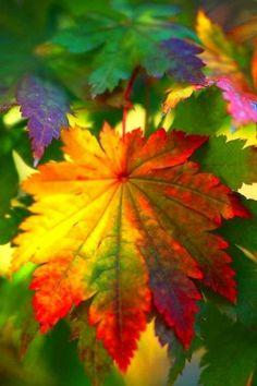 1000 images about beeldaspect kleur on pinterest door de van and rose trees - Koude en warme kleur ...