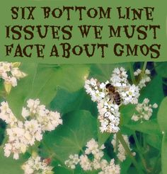 Six Bottom Line Issues We Must Face About GMOs ~The Farmer's Lamp
