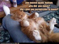Dingen die alleen een kattenpersoon herkend