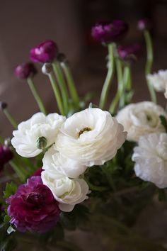 Urban Flowers: Ranunculus...