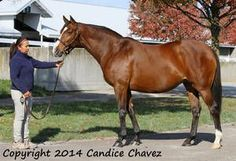 Miss Sea Oats(2006)Langfuhr- Oatsee By Unbridled. 4x4 To Nearctic, 5x5 To In Reality. 4 Starts 1 Third. $1,385.: