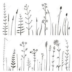 Sketchy Wild Field Flowers And Grass On White Stock Vector - Illustration of leaves, elements: 52804255 Photo about Rustic colorful meadow growth illustration set. Vector Illustration of nature, grass, natural - 52804255 Doodle Drawings, Doodle Art, Flower Drawings, Wildflower Drawing, Geometric Tatto, Botanical Line Drawing, Botanical Illustration, Simple Embroidery, Embroidery Patterns