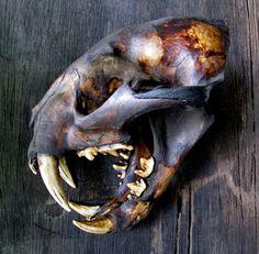 Animal Skeletons, Animal Skulls, Extinct Animals, Prehistoric Animals, Crane, Panther, Skull Reference, Clouded Leopard, Carnivore
