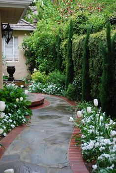 Anchor tall plantings. In this San Francisco garden, white tulips lend a pristine formality to a brick-edged, curved stone walkway""