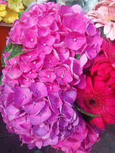 Flores para el jardín. Flors per al Jardí. #Petunias #Flores #Flowers #Garden