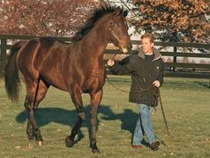 Managing Breeding Stallions