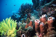 Deep into bunaken sea