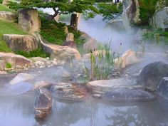 Great shot and beautiful garden!