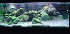 Rock scape for african cichlids