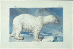 ours_polaire.htm  Nicolas Maréchal (1753-1802)
