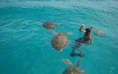 Swimming with turtles in Barbados www.holidaygenie.com