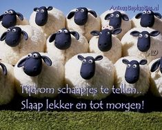 Shaun the Sheep Funny Animal Pictures, Funny Animals, John 10 27, Shaun The Sheep, Atheism, God Is Good, Chinese New Year, Sweet Dreams, Good Night