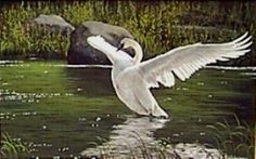 Ivory in the Emerald Pool. Wildlife Paintings, Graham, Emerald, Ivory, Oil, Animals, Animales, Animaux, Animal