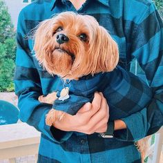 Matching blue and black button up flannels for dogs and humans. #twins