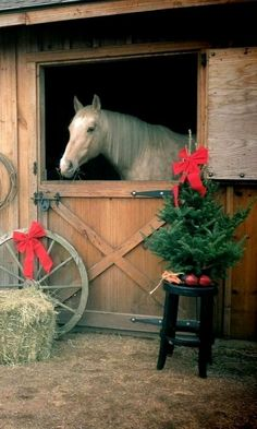 Christmas barn.. his very own Christmas tree w/ apples beneath it.  Perfect!