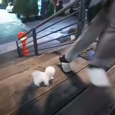 Enjoy new funniest and very cute compilation of the week about try not laugh funny animals' life video. Dogs are awesome animals. Cute Little Animals, Cute Funny Animals, Funny Cute, Cute Cats, Tiny Puppies, Cute Dogs And Puppies, Doggies, Funny Animal Memes, Funny Dogs