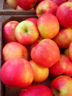 Honeycrisp apples my fave ever!! Lol I'll eat these anytime!