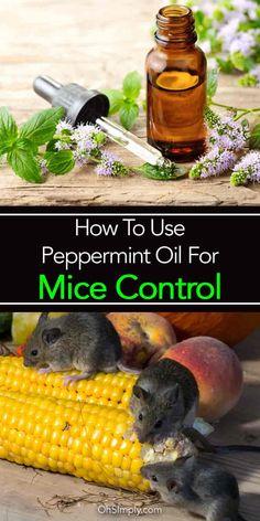 les 25 meilleures id es de la cat gorie peppermint oil for mice sur pinterest r pulsif souris. Black Bedroom Furniture Sets. Home Design Ideas