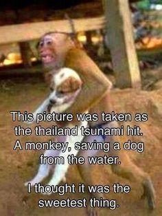 salvando a seres de otra especie !!!!!!!!!!!!!!!!!!