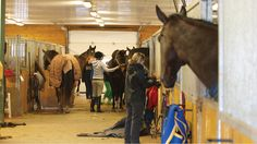 Find out which gross and potentially fatal diseases you can get from your horse, and how to avoid them....