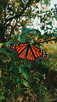 See more of sidneydayy's content on VSCO. Orange Aesthetic, Nature Aesthetic, Flower Aesthetic, Aesthetic Girl, Aesthetic Pastel Wallpaper, Aesthetic Backgrounds, Aesthetic Wallpapers, Butterfly Wallpaper Iphone, Iphone Background Wallpaper
