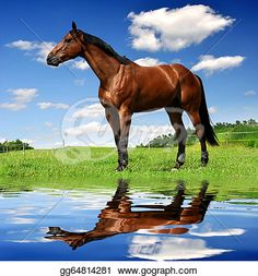 horse in the meadow Poster. Horse Photos, Horse Pictures, Art Images, Mammals, Equestrian, Horses, Stock Photos, Nature, Poster
