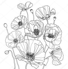 Coloring Page With Poppies. It Is A Big Raster Image Stock Photo, Picture And Royalty Free Image. Poppy Drawing, Doodle Drawing, Floral Drawing, Doodle Art, Botanical Line Drawing, Botanical Drawings, Botanical Illustration, Illustration Art, Poppy Coloring Page