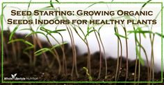 Seed Starting: Growing Your Organic Seeds Indoors For Healthy Plants - Whole Lifestyle Nutrition