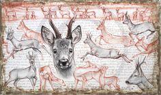 >oo MARCELLO PETTINEO oo< 280 - Roe deer