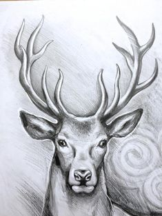 ORIGINAL deer art stag pencil drawing graphite home decor illustration animal art gift wall decor Pencil Drawings Of Animals, Animal Sketches, Art Drawings Sketches Simple, Beautiful Drawings, Nature Sketches Pencil, Realistic Drawings, Pencil Sketching, Amazing Drawings, Arte Do Harry Potter