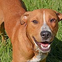 Adopt A Pet :: 10312120 - Brooksville, FL