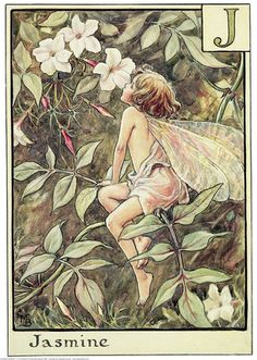 Illustration for the Jasmine Fairy. Author / Illustrator Cicely Mary Barker