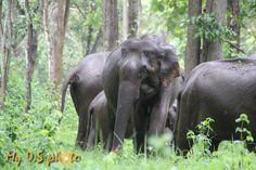 Wild elephants in the forest in Wayanad, India