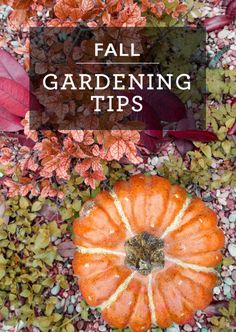 If you love to garden but the heat of summer has been hard on your plants, there's nothing like the promise of fall to fill your head with dreams of lush foliage. Before you start planting, take some time...