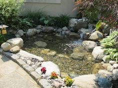 Entry level pond, ecosystem pond, fish pond, backyard pond, waterfalls, pond contractor, pond installer,