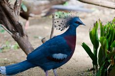beautiful bird  Kyle Ota |
