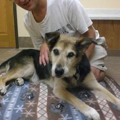 August 10 - Schoep after his 3rd Laser Therapy treatment at Bay Area Animal Hospital (photo credit).