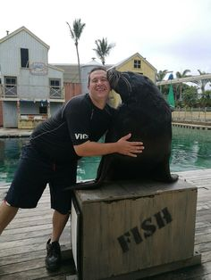 Getting a kiss from BJ, a adult male New Zealand Fur Seal at Sea World, Gold Coast, Australia on 21/3/17