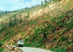 Osrblie po kalamite Country Roads