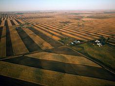 Monoculture wheat fields in Montana (NatGeo)
