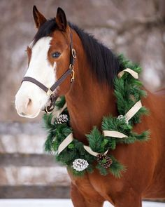 My beautiful mare Fritzie and I would like to wish you all a very merry Christmas! - Photo by Shelley Paulson